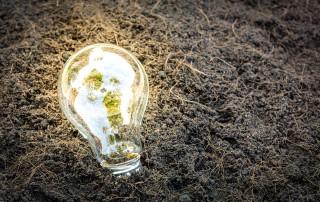 lampada con pianta che cresce dentro